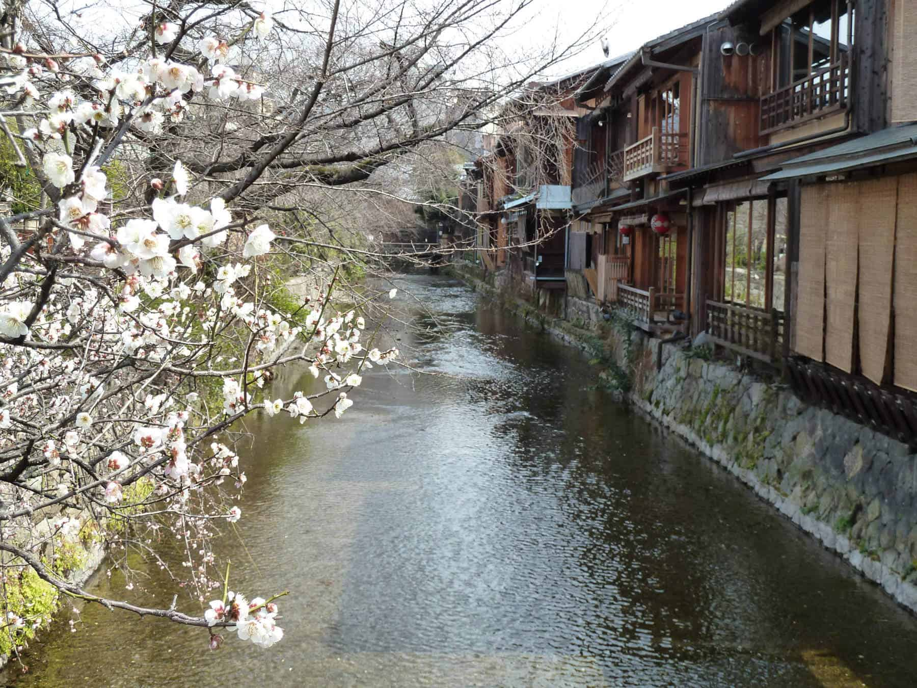 Kyoto at blossom time